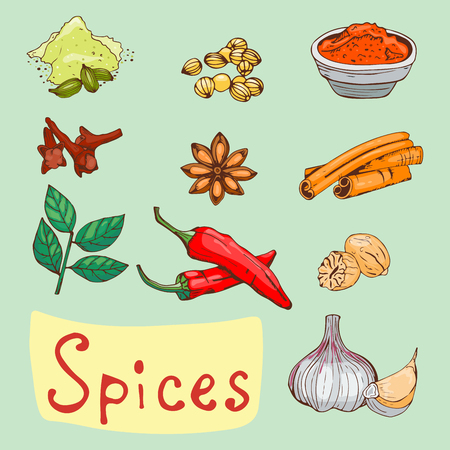 Spices seasoning hand drawn style food herbs elements and seeds ingredient cuisine flower buds leaves food plants healthy organic vegetable vector illustration.