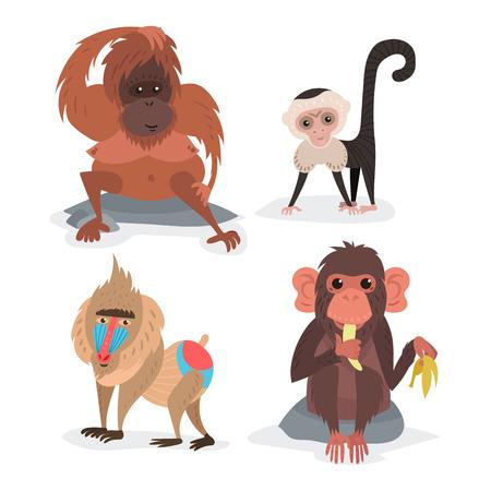 Verschillende broden aapkarakter dier wilde dierentuin aap chimpansee vector illustratie.