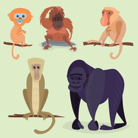 gorila: Different breads monkey character animal wild zoo ape chimpanzee vector illustration.