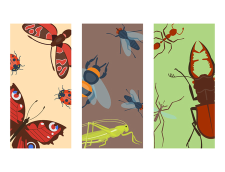 Colorful insects icards wildlife wing detail summer bugs wild vector illustration Illustration