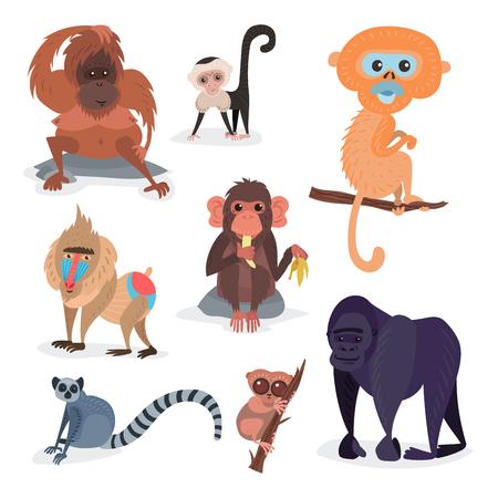 Different breads monkey character animal wild zoo ape chimpanzee vector illustration.
