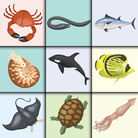 moray: Set of different types of sea animals illustration tropical character wildlife marine aquatic fish Illustration