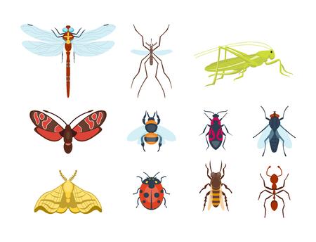 Bunte Insekten Icons isoliert Wildlife Flügel Detail Sommer Bugs wilde Vektor-Illustration Standard-Bild - 77769769