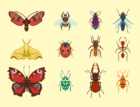 Colorful insects icons isolated wildlife wing detail summer bugs wild vector illustration
