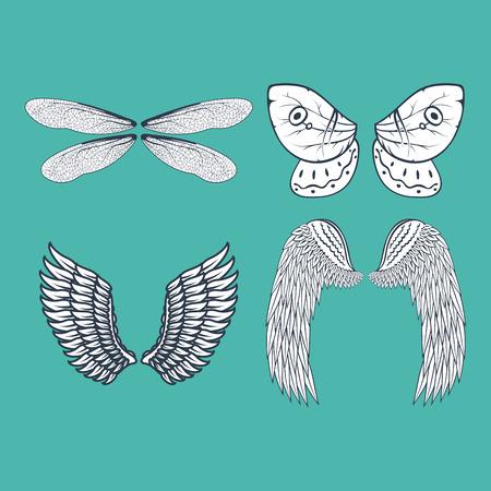 날개, 격리, 동물, 깃털, 피니언, 조류, 자유, 비행, 자연, 평화, 디자인,