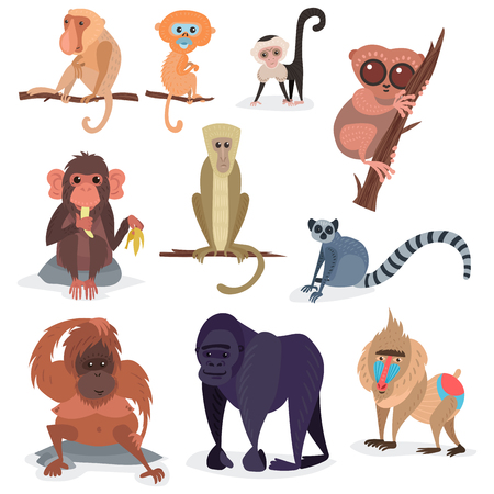 Different breads monkey character animal wild zoo ape chimpanzee vector illustration.