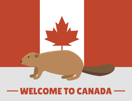 Brown beaver animal character mammal on canada red white flag background canadian vector illustration Фото со стока - 78474124