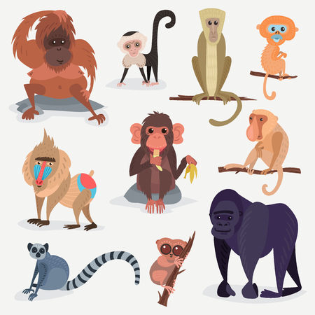 Different cartoon monkey breed character animal wild zoo ape chimpanzee vector illustration.