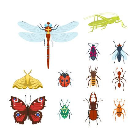 Icone insetti colorati isolati fauna selvatica dettaglio estate bug insetto illustrazione vettoriale Archivio Fotografico - 78499440