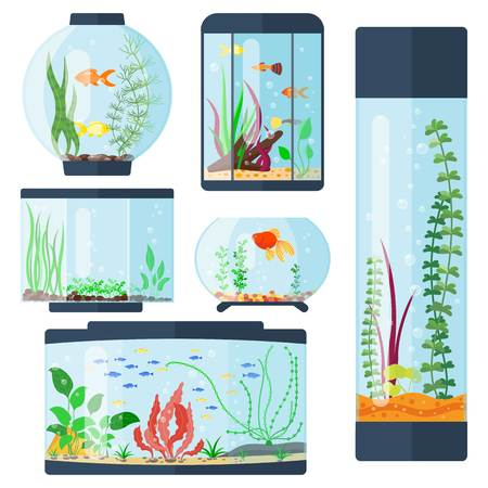 Transparent aquarium vector illustration isolated on white fish habitat aquarian house underwater tank bowl