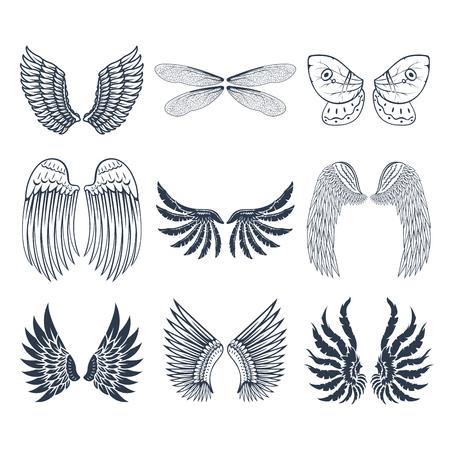 날개, 격리 된 동물, 깃털, 피니언, 조류, 자유, 비행, 자연, 평화,
