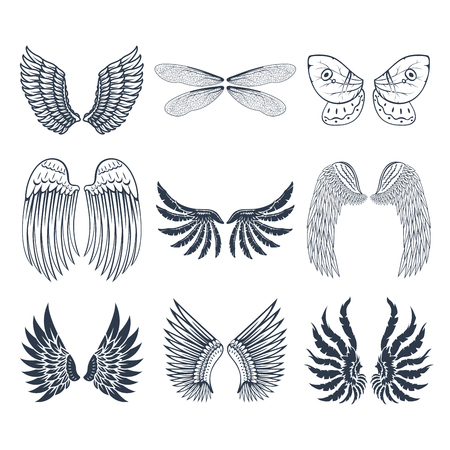 Wings isolated animal feather pinion bird freedom flight natural peace design illustration. Imagens