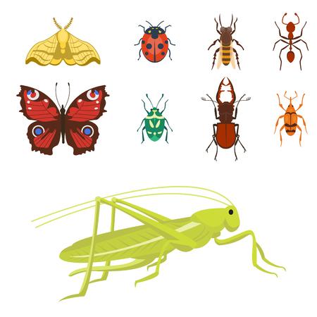 カラフルな昆虫アイコン分離野生動物翼詳細夏虫野生のベクトル図  イラスト・ベクター素材
