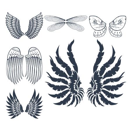 Beste Vogel Flügel Feder Anatomie Galerie - Anatomie Von ...