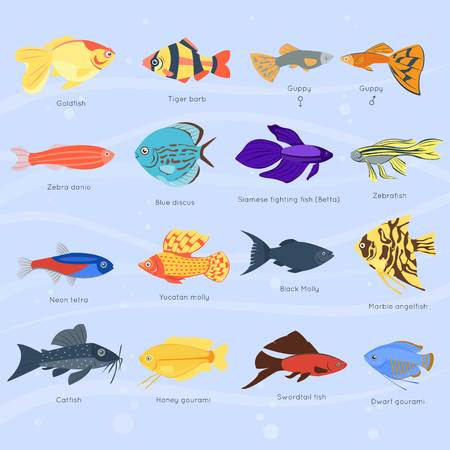 Exotic tropical fish different colors underwater ocean species aquatic nature flat isolated vector illustration Illustration