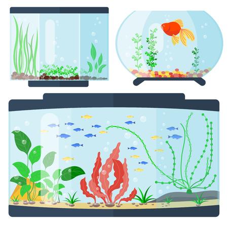 Transparent aquarium vector illustration habitat water tank house underwater fish tank bowl.
