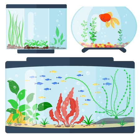 Transparent aquarium vector illustration habitat water tank house underwater fish tank bowl.