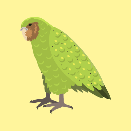Cartoon tropical kakapo parrot wild animal bird vector illustration wildlife feather zoo color nature vivid.