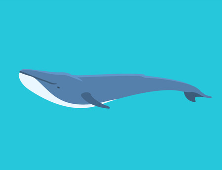 Vector whale illustration north surface deep humpback ocean marine mammal wildlife aquatic animal character.