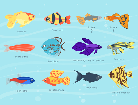 Exotic tropical fish different colors underwater ocean species aquatic nature flat isolated vector illustration Çizim