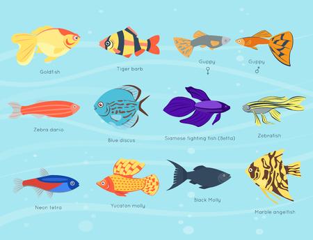 Exotique, poisson, différent, couleurs, sous-marin, océan, espèces, aquatique, nature, plat, isolé, vecteur, illustration Vecteurs