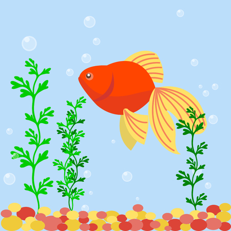 Transparent aquarium sea aquatic background vector illustration habitat water tank house underwater fish algae plants. Illustration