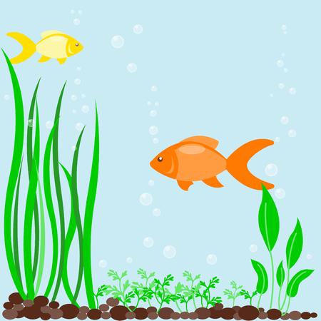 Transparent aquarium sea aquatic background vector illustration habitat water tank house underwater fish algae plants. Illustration
