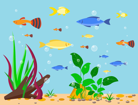 Transparent aquarium sea aquatic background vector illustration habitat water tank house underwater fish algae plants. Vettoriali