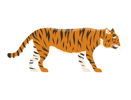 Tiger action wildlife animal danger mammal fur wild bengal wildcat character vector illustration