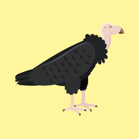 Andean condor animal largest flying bird in griffon world wildlife nature canyon predator america character vector illustration