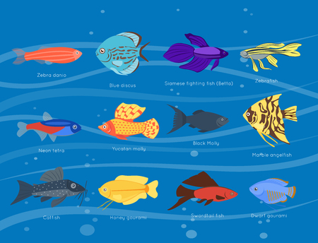 zebrafish: Exotic tropical fish different colors underwater ocean species aquatic nature flat isolated vector illustration Illustration