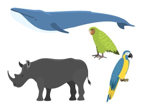 벡터 고래 그림 북쪽 서피스, 깊은, 향유, 해양, 포유류, 야생 동물, 수생, 멸종 위기, 일러스트