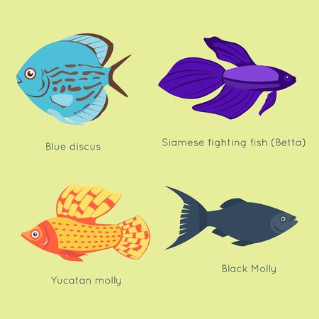Exotic tropical fish different colors underwater ocean species aquatic nature flat isolated vector illustration Illusztráció