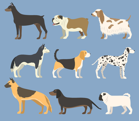 Dog pet character bread in flat style puppy pet animal doggy vector illustration. Ilustrace