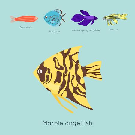エキゾチックな熱帯の魚別色水中海種水生自然フラット分離ベクトル図  イラスト・ベクター素材