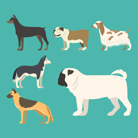 dog: Funny cartoon dog character bread in flat style puppy pet animal doggy vector illustration. Illustration
