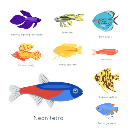 molly fish: Exotic tropical fish different colors underwater ocean species aquatic nature flat isolated vector illustration. Decorative wildlife cartoon fauna aquarium water marine life.