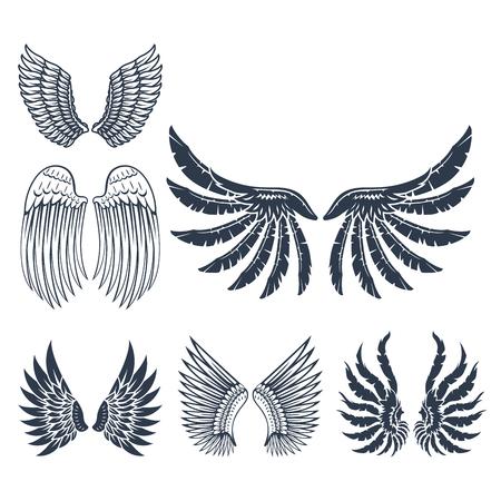날개, 동물, 날개, 자유, 비행, 자연, 매가, 삶, 평화, 디자인, 비행, 요소, 독수리, 날개, 측면, 아름다움 피난처 부드러운 해부학 그래픽입니다. 일러스트