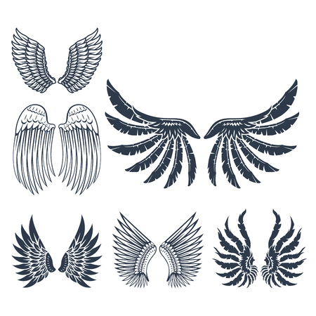 Wings isolated animal feather pinion bird freedom flight and natural hawk life peace design flying element eagle winged side shape vector illustration. Beauty haven soft anatomy graphic. Illustration