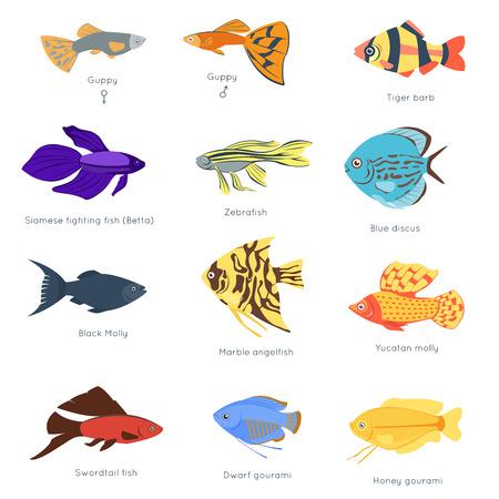 Exóticos tropicales peces diferentes colores submarinos océano especies acuáticas naturaleza plana ilustración vectorial Ilustración de vector