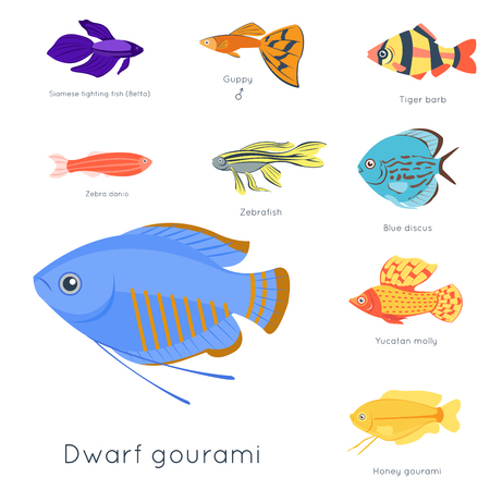 Exotic tropical fish different colors underwater ocean species aquatic nature flat isolated vector illustration Stock Photo