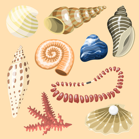 Sea marine animals and shells souvenirs cartoon vector illustration spiral tropical mollusk mussel decoration