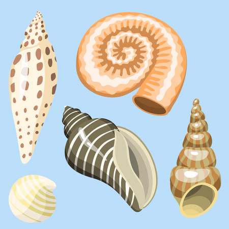 Sea marine animals and shells souvenirs cartoon vector illustration spiral tropical mollusk mussel decoration
