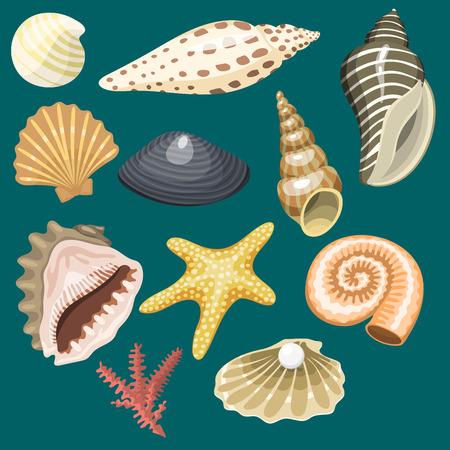 海海洋動物や貝殻のお土産。