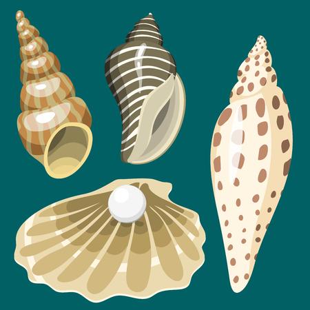 Sea marine animals and shells souvenirs cartoon vector illustration spiral tropical mollusk mussel decoration Reklamní fotografie - 83538118