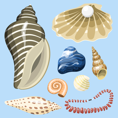 Sea marine animals and shells souvenirs cartoon vector illustration spiral tropical mollusk mussel decoration Reklamní fotografie - 86739714