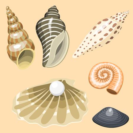 海海洋動物や貝殻のお土産漫画のベクトル図