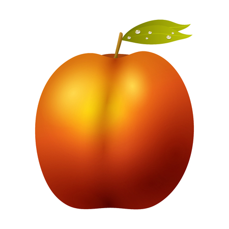 Peach fruit realistic 3d healthy vegetarian sweet ripe vector illustration.