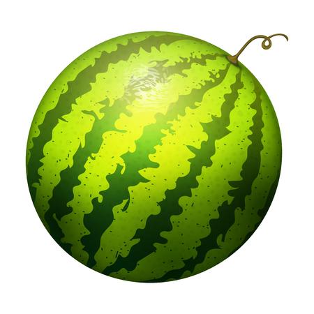 熟したストライプ スイカ現実的なジューシーなベクトル イラスト自然の緑は、熟したメロンを分離しました。