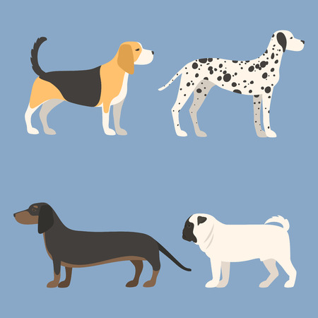 Funny cartoon dog character bread in flat style happy puppy and isolated friendly mammal vector illustration. Domestic element flat comic adorable mascot.